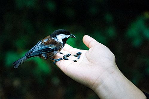 Изработване на хранилки за птици